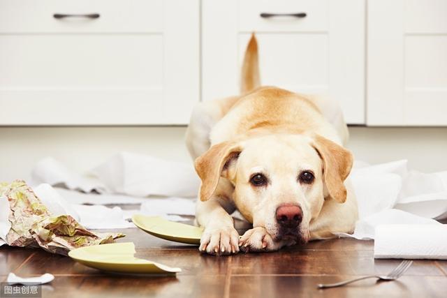 你真的懂狗吗?读懂狗狗这5种行为语言,再凶的狗也会乖乖听话