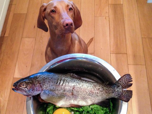 主人吃鱼和虾蟹,可以给狗狗吃吗?其实狗狗并不适合吃海鲜