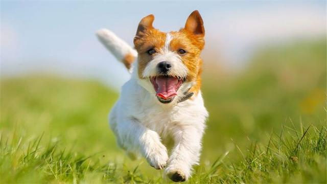 """兽医告诉你:狗狗狂犬病的""""6种表现"""",一旦发现,立即远离"""