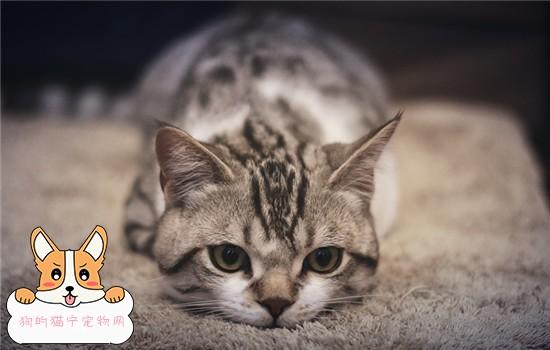 猫咪感冒了能传染给人吗?_猫咪感冒传染吗_猫咪打喷嚏会传染给人吗